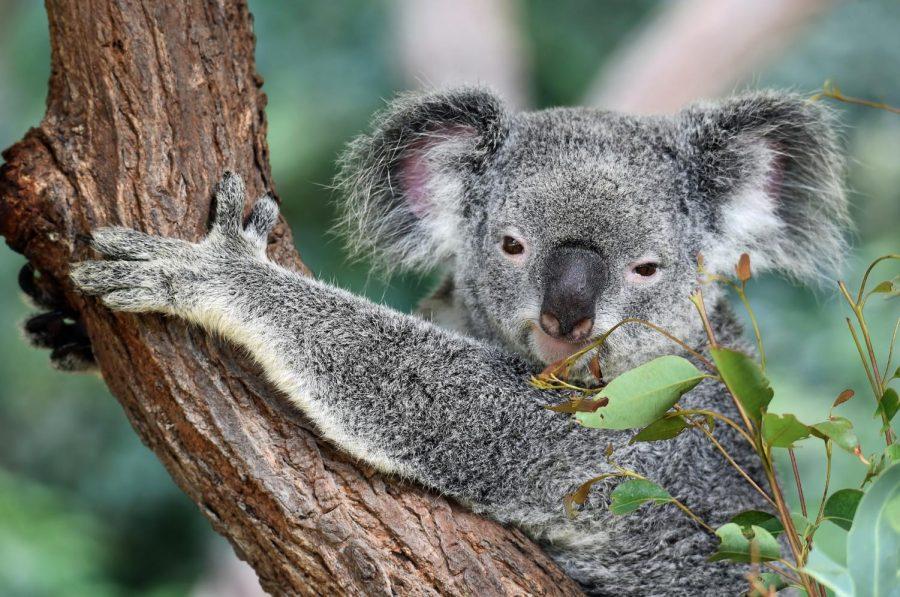 Australia+Wildfires+Cause+Destruction